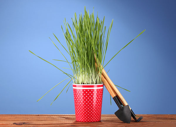 bigstock_Green_grass_in_a_flowerpot_on__30221213.How to place images on 3d objects