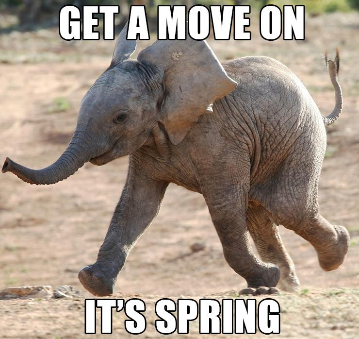 Baby Elephant Running image ©Four Oaks