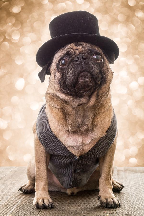 Image Contributor:   dogfordstudios