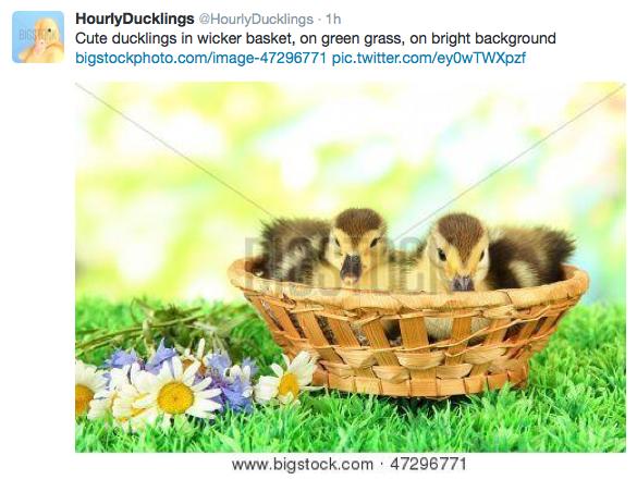 Follow @hourlyducklings