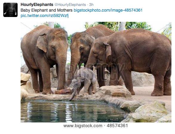 Follow @hourlyelephants
