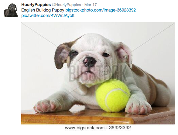 Follow @hourlypuppies