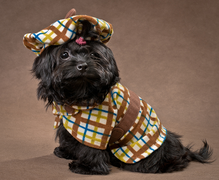 It's National Dress Up Your Pet Day!