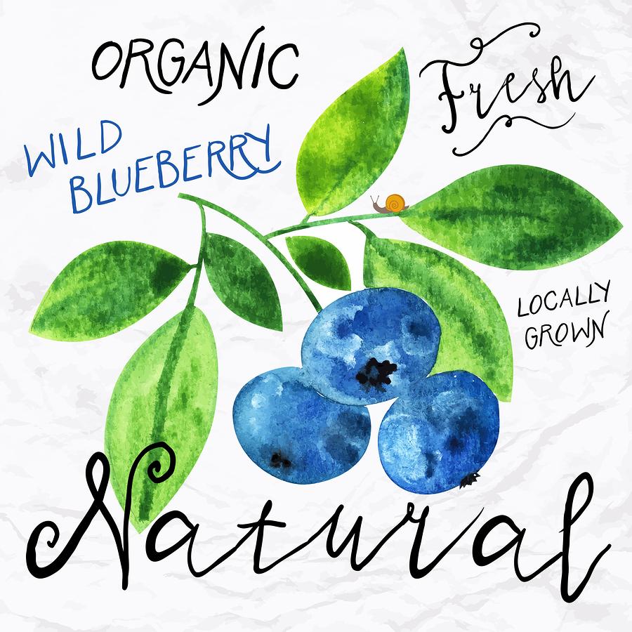 Watercolor blueberry    tukkki