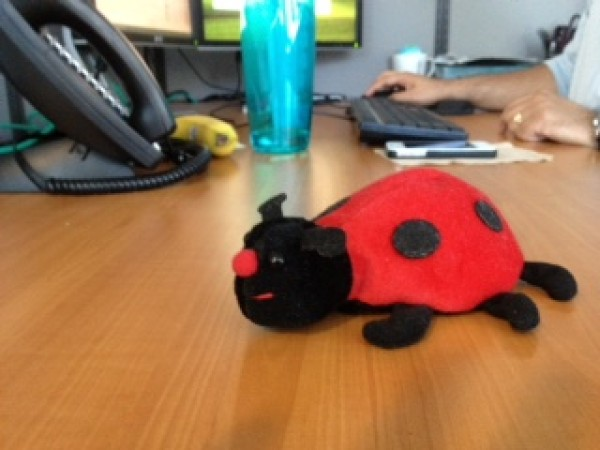 Photo of Ladybug Desk Trinket