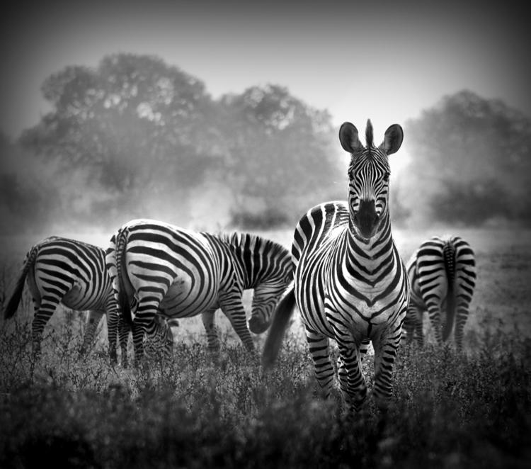 Stunning B&W Wildlife Photography from Donovan Van Staden