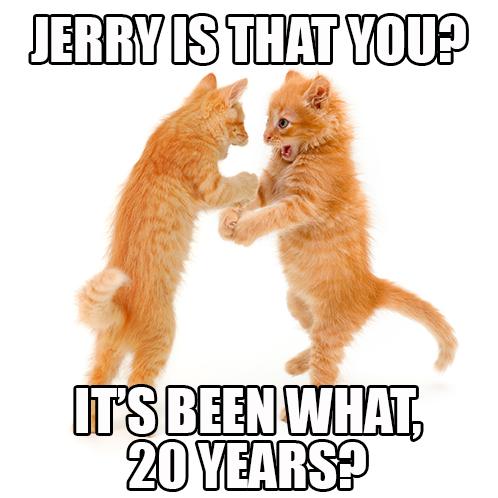 Cat meme.