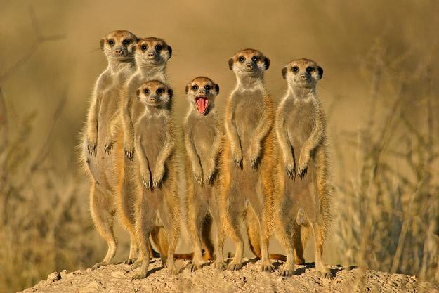 14 Beautiful and Captivating Wildlife Photos