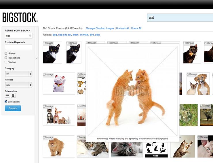 Photoshop Basics: How to Make a Really Funny Cat Meme