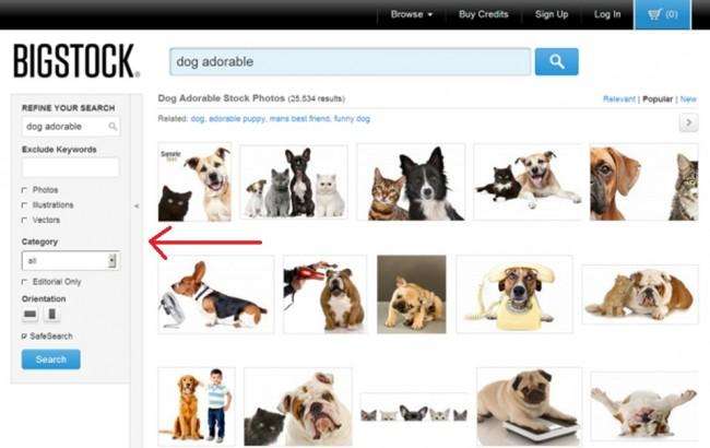 Dog adorable search