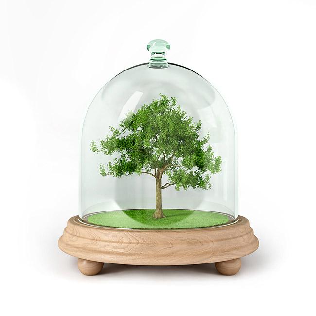 Tree in glass enclosure cloche bell jar