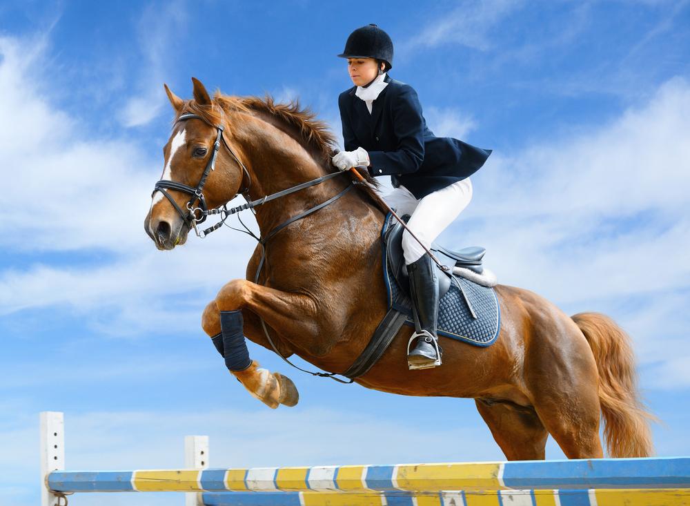 Jumping Horse image ©Abramova Kseniya