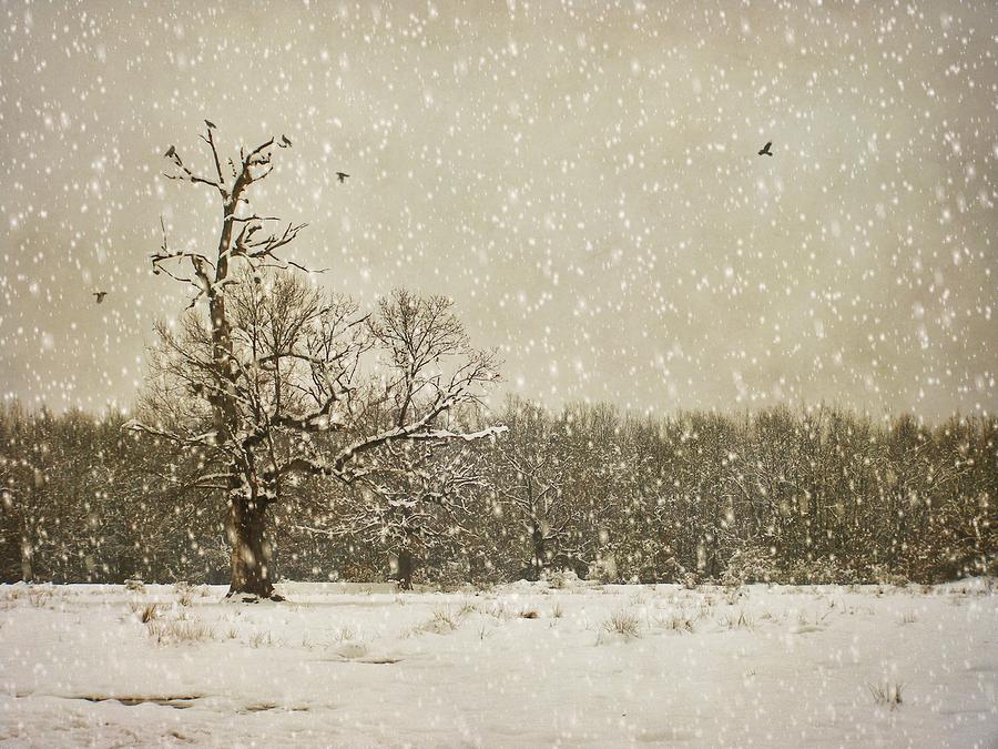 Winter photography  | alin b.