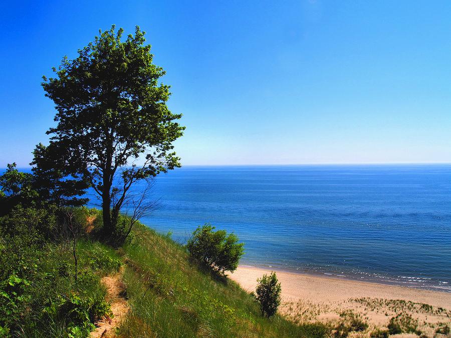 Image of tree on dune, Lake Michigan by Edward Stephens