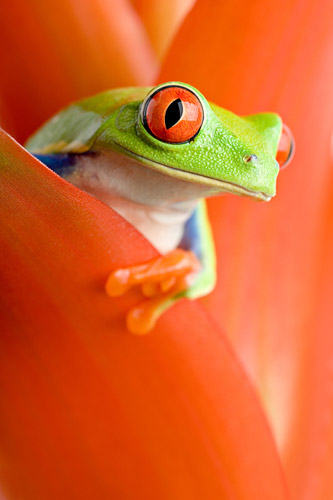 bigstock_Frog_In_A_Plant_1666630